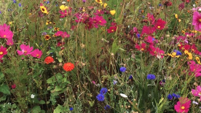 Vielfältige Blütenpracht: lebenswichtig für Bienen und Insekten